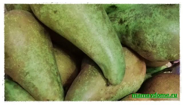 Груша «Конференция» — плод здоровья