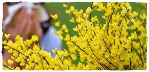 Профилактика аллергии и меры первой помощи при укусах ядовитых животных