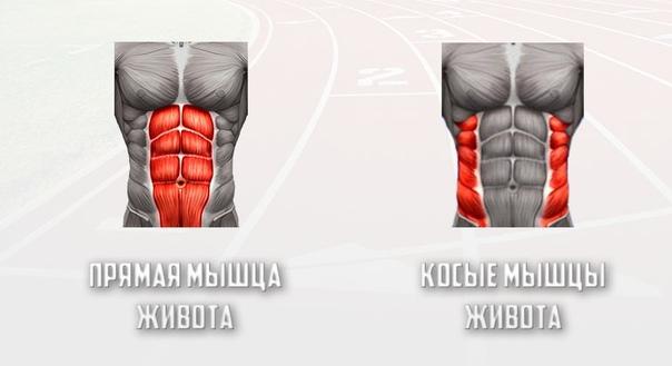 Что необходимо знать о своих мышцах