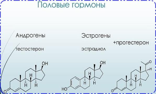 Гормоны яичников и их функции в организме у женщин, Какие гормоны вырабатывают яичники у женщин и их функции