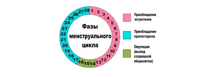 Когда начинаются первые месячные у девочек. Менструация у женщин норма и возможные нарушения, фазы менструального цикла.
