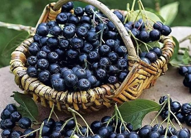 Фитотерапия при атеросклерозе полезные плоды и травы