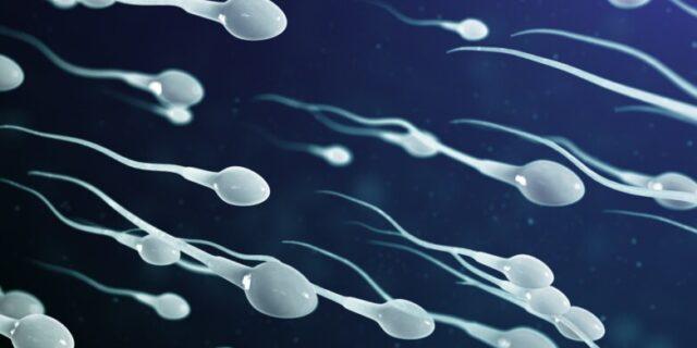 Нормальные показатели спермограммы, спермограмма расшифровка, исследование спермы