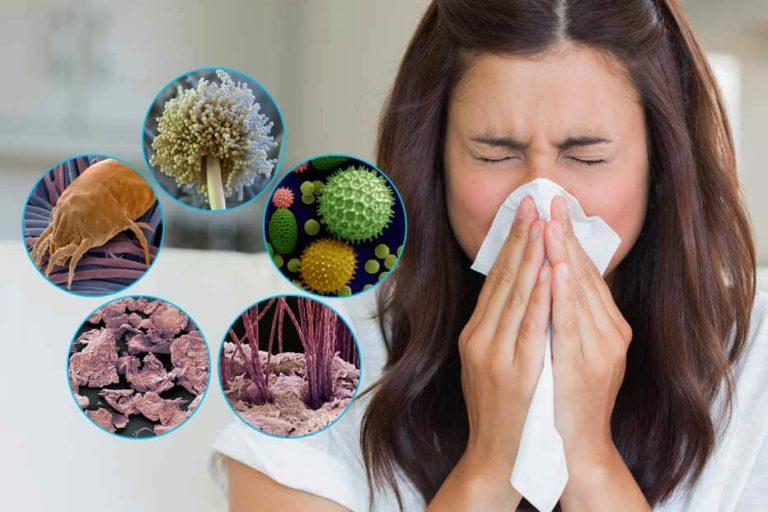 Бытовые аллергены: пыль и клещи