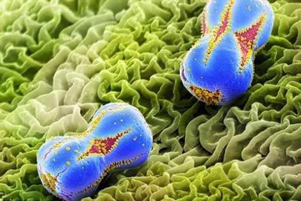 Инфекционные аллергены у человека