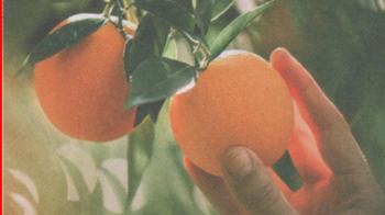 Дети солнца: цитрусовые