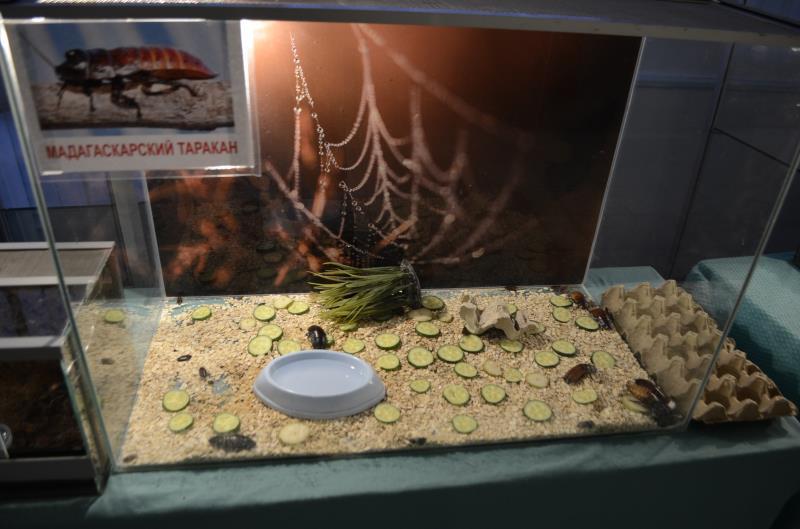 Выставка пауков и тараканов  Мурманск