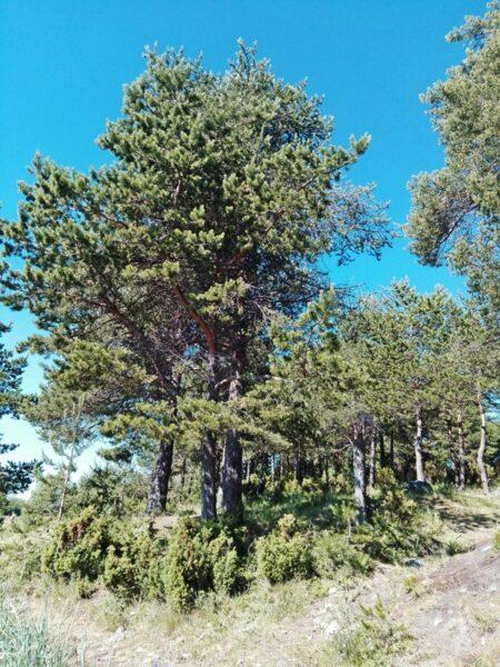 Набережная Кандалакши лес