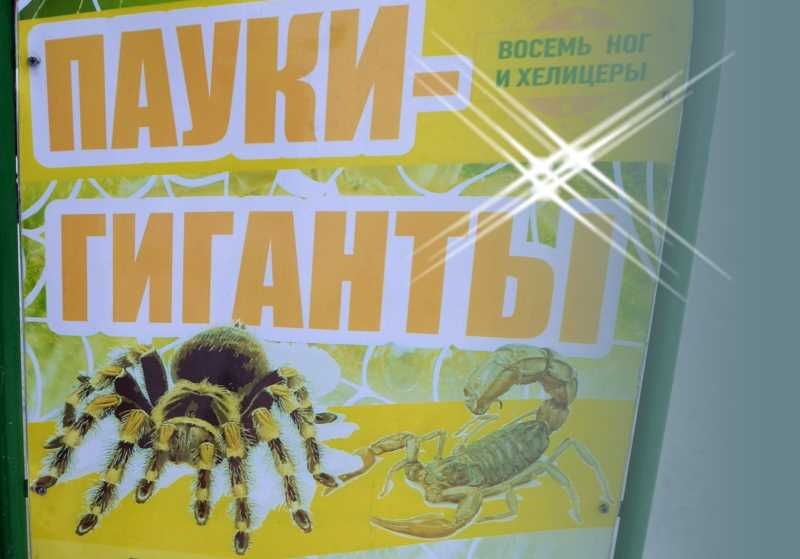Выставка пауков-гигантов в Кандалакше в МБУ «Музей истории города Кандалакша»