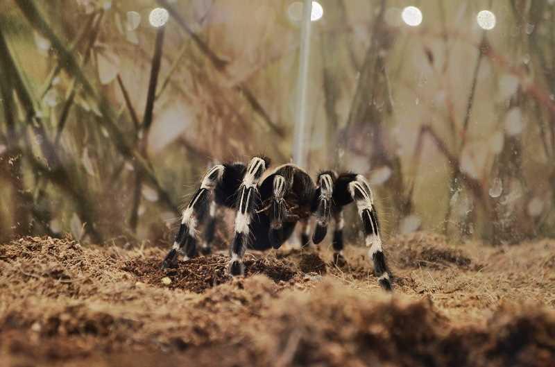 выставка пауков-гигантов в Кандалакше