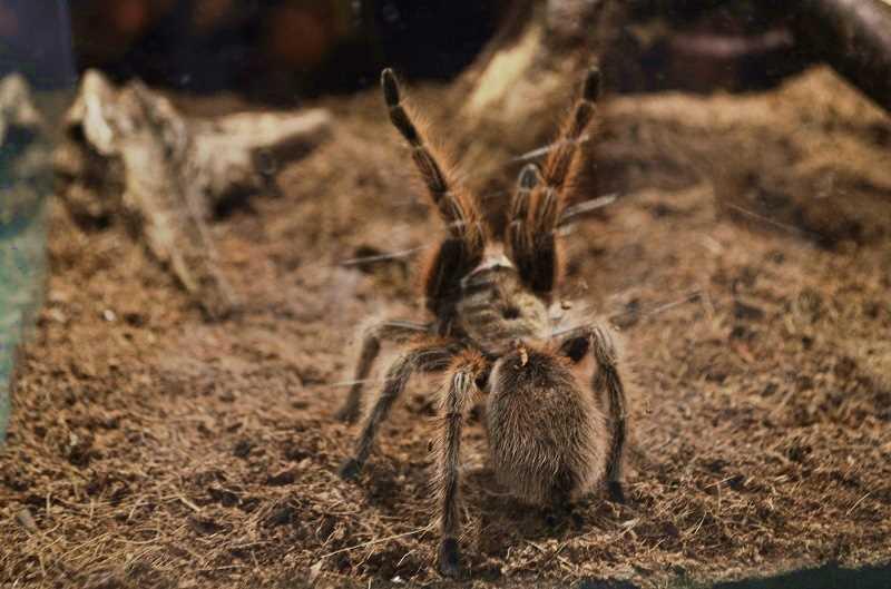 выставка пауков-гигантов кандалакша
