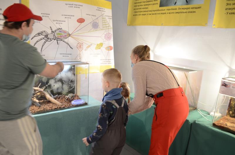 Выставка пауков и тараканов