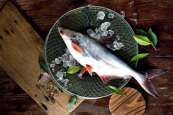 Пангасиус описание рыбы и как приготовить пангасиус рецепты