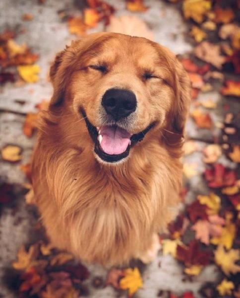 Правильный рацион питания собаки или сбалансированный корм для собаки