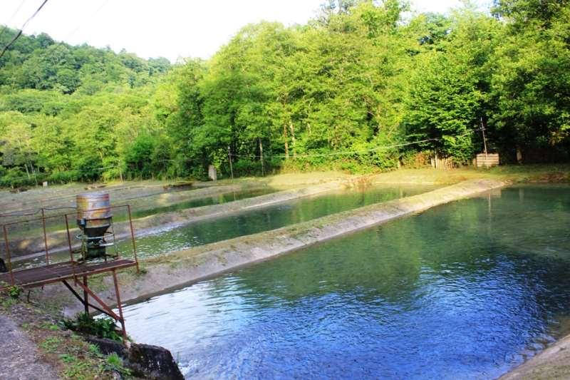 Рыбалка Абхазия Форель. Форелевое хозяйство Абхазия Гудаута