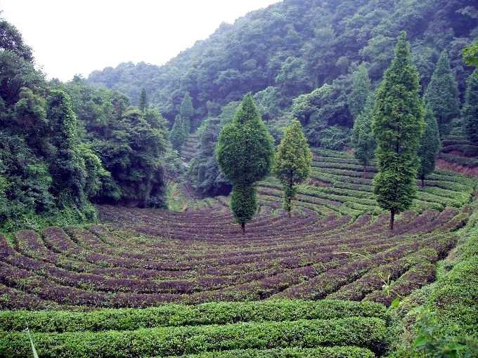история домашнего напитка гуандун
